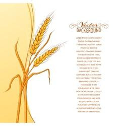Wheat ear card vector image