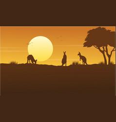 kangaroo scenery on park silhouettes vector image