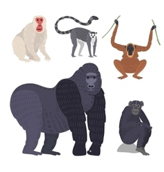 Different types of monkeys rare animal set vector image vector image