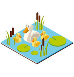 3d design for pond scene with ducks vector