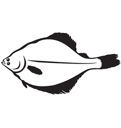 flatfish vector image