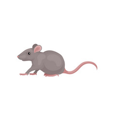Grey mouse rodent animal on a vector