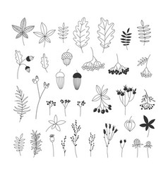 hand drawn autumn floral collection vector image