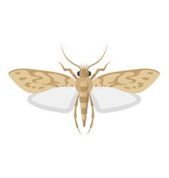 Mole pest entomology icon little harmful moth vector