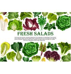 Salad leaf vegetable greens banner border design vector