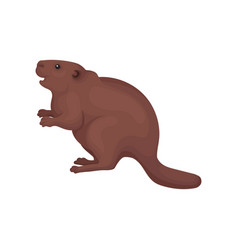 Beaver wild forest rodent animal vector
