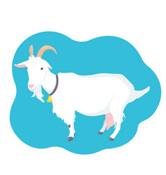 goat with horns udder and bell on the neck farm vector image