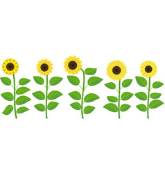 Isolated sunflowers vector