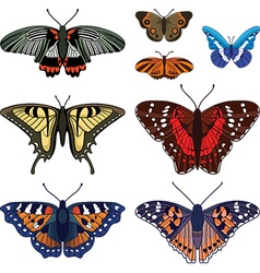 set with butterflies isolated on white vector image