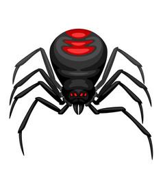 black widow spider icon vector image