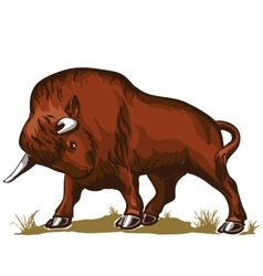 Buffalo bull bison vector