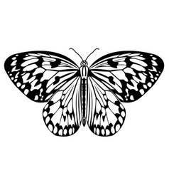 butterfly monochrome drawing in black and white vector image