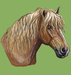 Colorful hand drawing horse portrait-2 vector