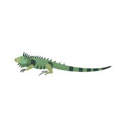 green iguana isolated on white background vector image