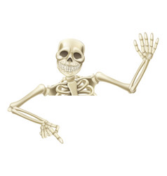 halloween skeleton pointing vector image