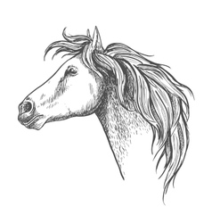 Racehorse head sketch for horse racing design vector image