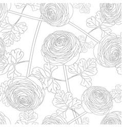 Ranunculus flower on white background vector