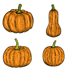 set of pumpkin isolated on white background vector image vector image