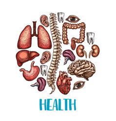 human organs health sketch poster vector image