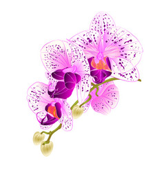 stem with flowers and buds beautiful orchid vector image