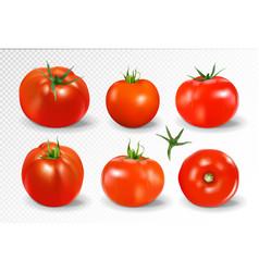 Tomato set yellow photo-realistic vector
