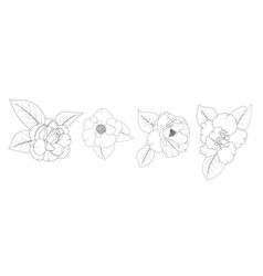 camellia japonica flower set isolated vector image