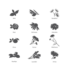 Herb symbols set vector