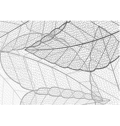 halftone black and white leaf pattern abstract vector image