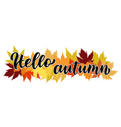 hello autumn hand written composition with maple vector image