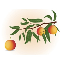 Peach branch vector