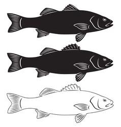 Seabass vector