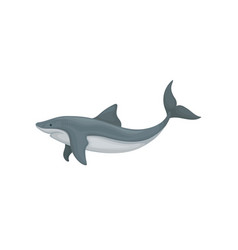 swimming angry shark sea animal fish side view vector image