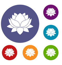 Water lily flower icons set vector
