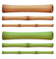 Bamboo stems isolated green and brown sticks vector
