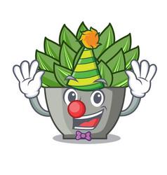 Clown cartoon echeveria cactus in cactus garden vector