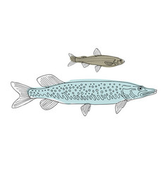 fish sketch for your design vector image