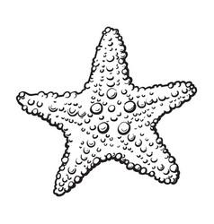 hand drawn starfish underwater living organism vector image