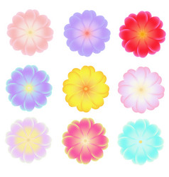 isolated flowers clip art for banners vector image
