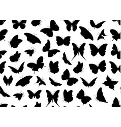 butterfly seamless isolated vector image