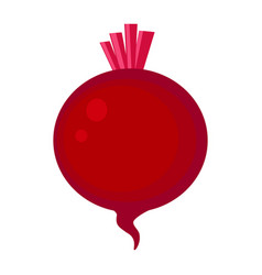 colorful red beetroot isolated vector image