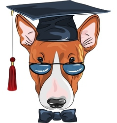funny graduated dog Bullterrier vector image