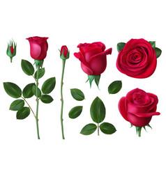 realistic rose dog-rose flower blossom petals vector image