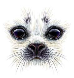 A baby seal color portrait of baby seal vector