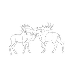 a deer fighting drawing by lines vector image