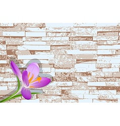 Blooming crocus on a background of a brick wall vector image
