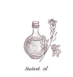 Drawing mustard oil vector