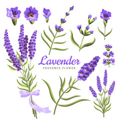 lavender set watercolor lavender flowers and vector image
