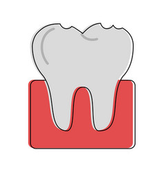 Molar tooth dentistry related icon image vector
