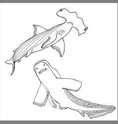 shark coloring book hand drawing coloring book vector image