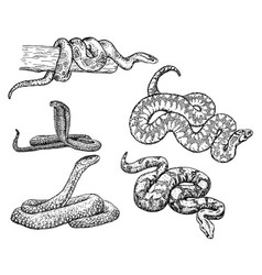Snakes sketch icon set vector